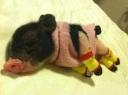Piglet sweater